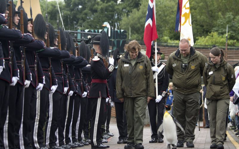 *** MANDATORY BYLINE PIC BY RZSS/KATIE PATON/ CATERS NEWS *** - (PICTURED: Brigadier Sir Nils Olav being greeted by 50 soldiers at RZSS Edinburgh Zoo) - From one king to another, the King of Norways Guard visited RZSS Edinburgh Zoo to bestow a unique honour upon the resident king penguin. Already a knight, the most famous king penguin in the world was given the new title of Brigadier Sir Nils Olav by over 50 uniformed soldiers. His Majesty the King of Norways Guard, who were in town for The Royal Edinburgh Military Tattoo delivered the honour recognising the zoos work. SEE CATERS COPY