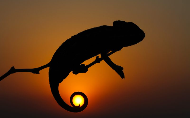 CATERS_BACKLIGHT_CHAMELEON_03