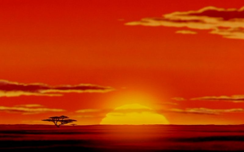 A Scene Right Out Of The Lion King Caters News Agency