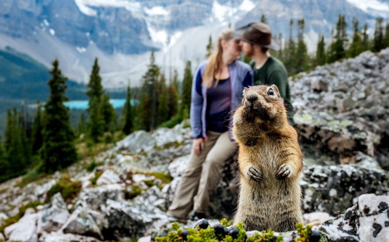 PIC FROM CATERS NEWS - (PICTURED: A squirrel photobombs the romantic photo of Marcin Karpowicz and his wife Dorota, both 39) - Thats nuts! This happy couple got more than they bargained for - when their engagement shoot was photobombed by a SQUIRREL. Wedding photographer Marcin Karpowicz and his wife Dorota, both 39, were taking a series of romantic shots for a newly engaged couple at Banff National Park, in Alberta, Canada. As they snapped passionate pictures of the loved-up couple, a sly squirrel snuck into the shot as he nibbled on some nuts. SEE CATERS COPY.
