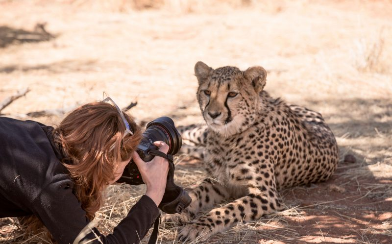 PIC BY JEAN WIMMERLIN/CATERS NEWS - (PICTURED: Julia takes a pic of the cheetah.) -  Forget mans best friend  this is womans best friend! This adorable friendship between a woman and a CHEETAH will melt your heart. The cute snaps were taken by Julia and Jean Wimmerlin, from Switzerland, during a stay at Lapa Lange Lodge in Namibia. The spotted cats were in a playful mood as they bounded around like kittens with their new pal. SEE CATERS COPY.