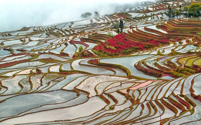 PIC BY ENRICO BARLETTA/CATERS NEWS - (PICTURED: A view of a red coloured rice terrace in China.) - These stunning views of intricately designed rice fields will take your breath away. The pretty paddy fields were snapped by Italian photographer Enrico Barletta, during a business trip to China. The unique aerial views of the fields, which are in Chinas Yuanyang Yunnan Province, show the beautiful patterns created by the growing rice. SEE CATERS COPY.