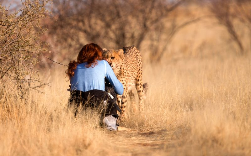 PIC BY JEAN WIMMERLIN/CATERS NEWS - (PICTURED: Julia crouches down to take a picture of the cheetah. ) -  Forget mans best friend  this is womans best friend! This adorable friendship between a woman and a CHEETAH will melt your heart. The cute snaps were taken by Julia and Jean Wimmerlin, from Switzerland, during a stay at Lapa Lange Lodge in Namibia. The spotted cats were in a playful mood as they bounded around like kittens with their new pal. SEE CATERS COPY.
