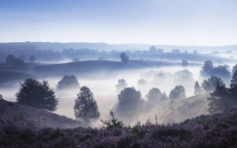 **PLEASE NOTE MANDATORY BYLINE** PIC BY ALBERT DROS / CATERS NEWS (PICTURED: A misty morning over the lavender field ) You can almost smell the lavender there is so much of the flower blanketing the beautiful Dutch landscapes in a sea of purple. Dutch landscape photographer, animator and lecturer, Albert Dros, 31 is on a mission to prove his homeland has far more beauty than some would have it. It would be hard to argue with the man who has captured the hills of The Posbank in Rheden and the fields of Hilversum in such breath-taking Netherlands landscapes. Albert said: I respect and admire the beauty of nature around me and want to show my country to the world. SEE CATERS COPY