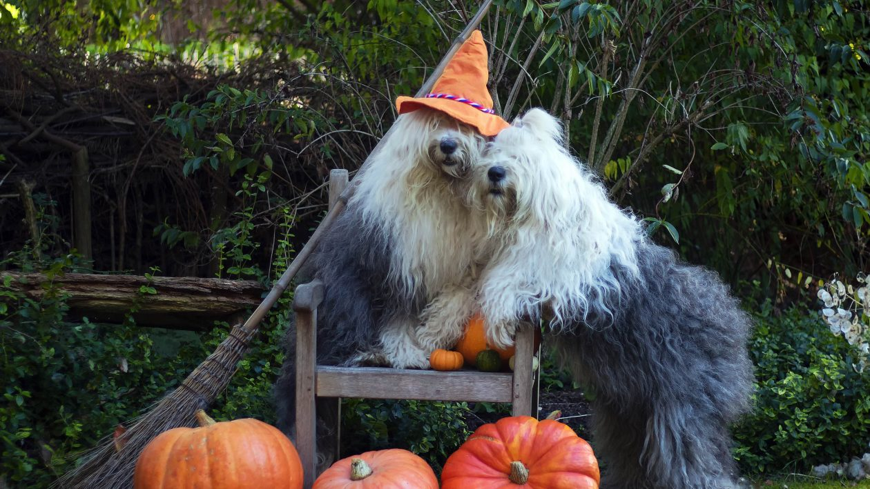 0CATERS_PUMPKIN_DOGS_01