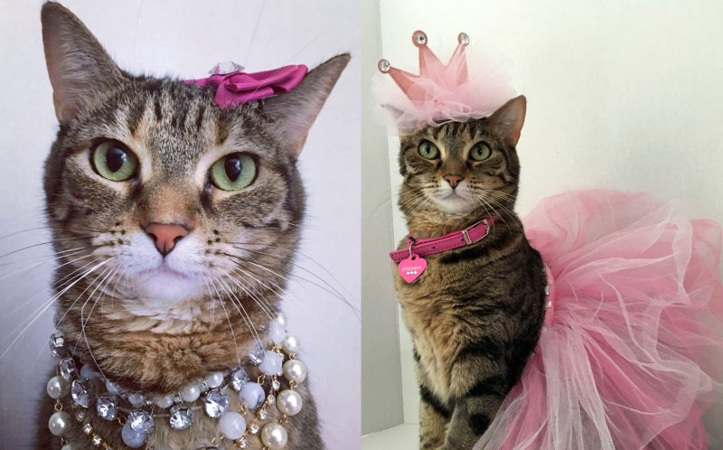 PIC FROM FRANCISCO VEGA / CATERS NEWS - The tabby has an abundance of wigs, dresses, and other accessories, she even celebrates birthdays with cakes and balloons.