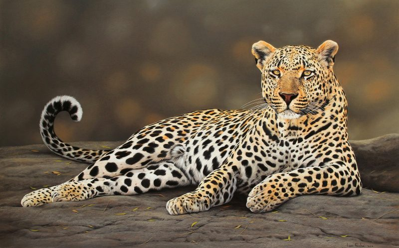 PIC BY LEON FOUCHE / CATERS NEWS -A hyper realistic painting of a male leopard by Leon Fouche.