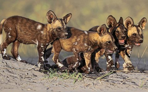 PIC BY LEON FOUCHE / CATERS NEWS -(PICTURED:  A hyper realistic painting of a pack of wild dog pups by Leon Fouche) - From intricately detailed portraits of a pack of wild dogs, to a tender picture of a mother cheetah and her cubs, these paintings are the work of talented artist Leon Fouche. Leon is also a photographer and has captured images of animals including Africas big five at game reserves across South Africa. But not only has he a talent for photography but he also has the skills to recreate some of his favourite photos, turning them into incredibly detailed paintings. SEE CATERS COPY.