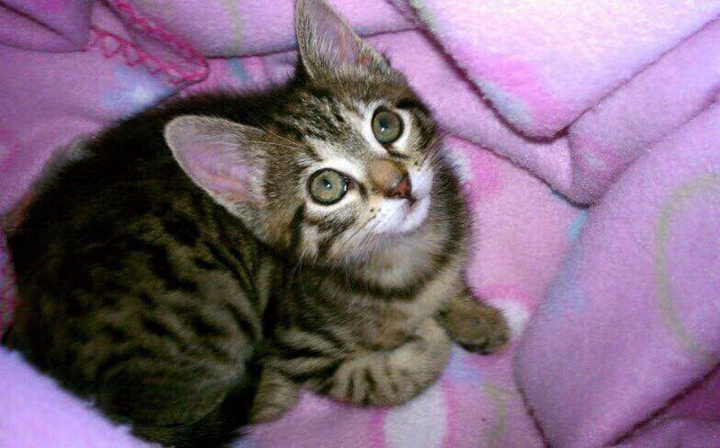 PIC FROM FRANCISCO VEGA / CATERS NEWS - Princess Vega Nena as a kitten.
