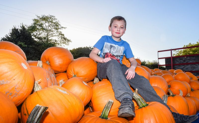 PIC BY MERCURY PRESS - Harry Houghton, 8, amongst the pumpkins at the farm