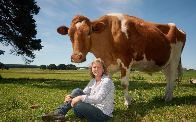 PICTURES FROM CATERS NEWS/ FRANK MONGER  - Big Moo weighs more than a tonne.