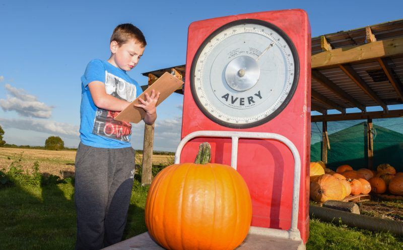 PIC BY MERCURY PRESS - Harry Houghton, 8, on the pumpkin farm.
