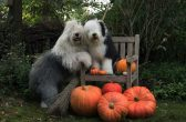 PIC BY CEES BOL/ CATERS NEWS - Sophie and Amy posing with their halloween attire.