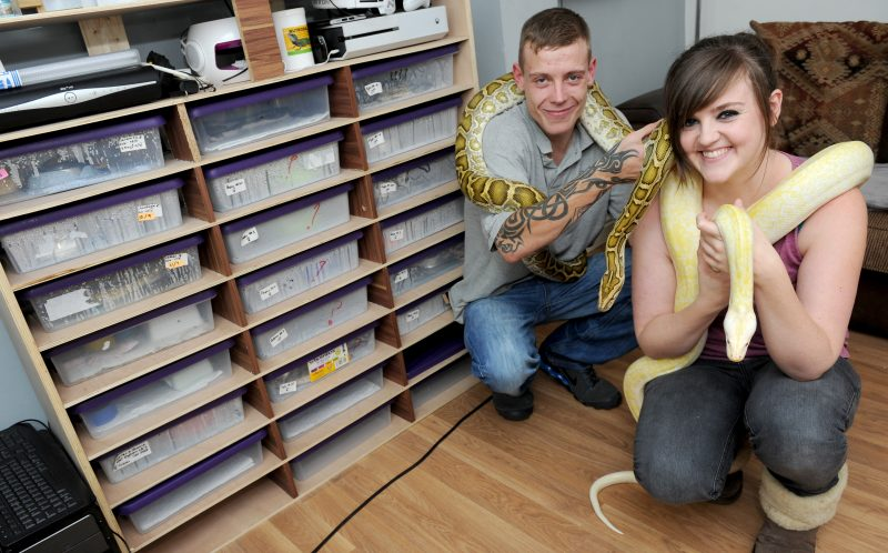 PIC BY KORAY EROL/CATERS NEWS (Pictured: Lewis Weightman and Sam Gorman with more of the smaller snakes) - A snake mad couple have transformed their living room into a reptile paradise  with some snakes weighing 12 STONE. Lewis Weightman, 28, from Bulkington, Warwickshire and his partner, Sam Gorman, 23, began collecting snakes six years ago and now have dozens of them caged in their lounge  they include 12 foot long boa constrictors and pythons. The couple even have an entire fridge full of mice and rats to feed their snakes in their kitchen. The snake breeders even claim some of their friends are too frightened to visit their home in case some of the snakes escape. With their snake and lizard collection increasing every year, the couple say they will probably never live without reptiles. SEE CATERS COPY.