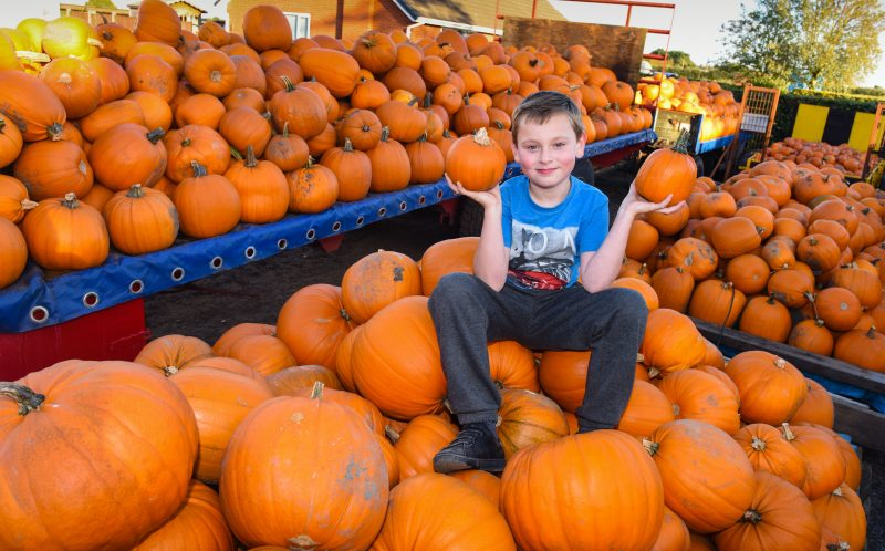 8YO GROWS PUMPKINS BIGGER THAN H