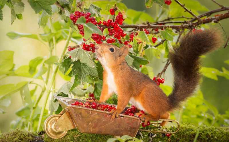 Autumn Squirrels
