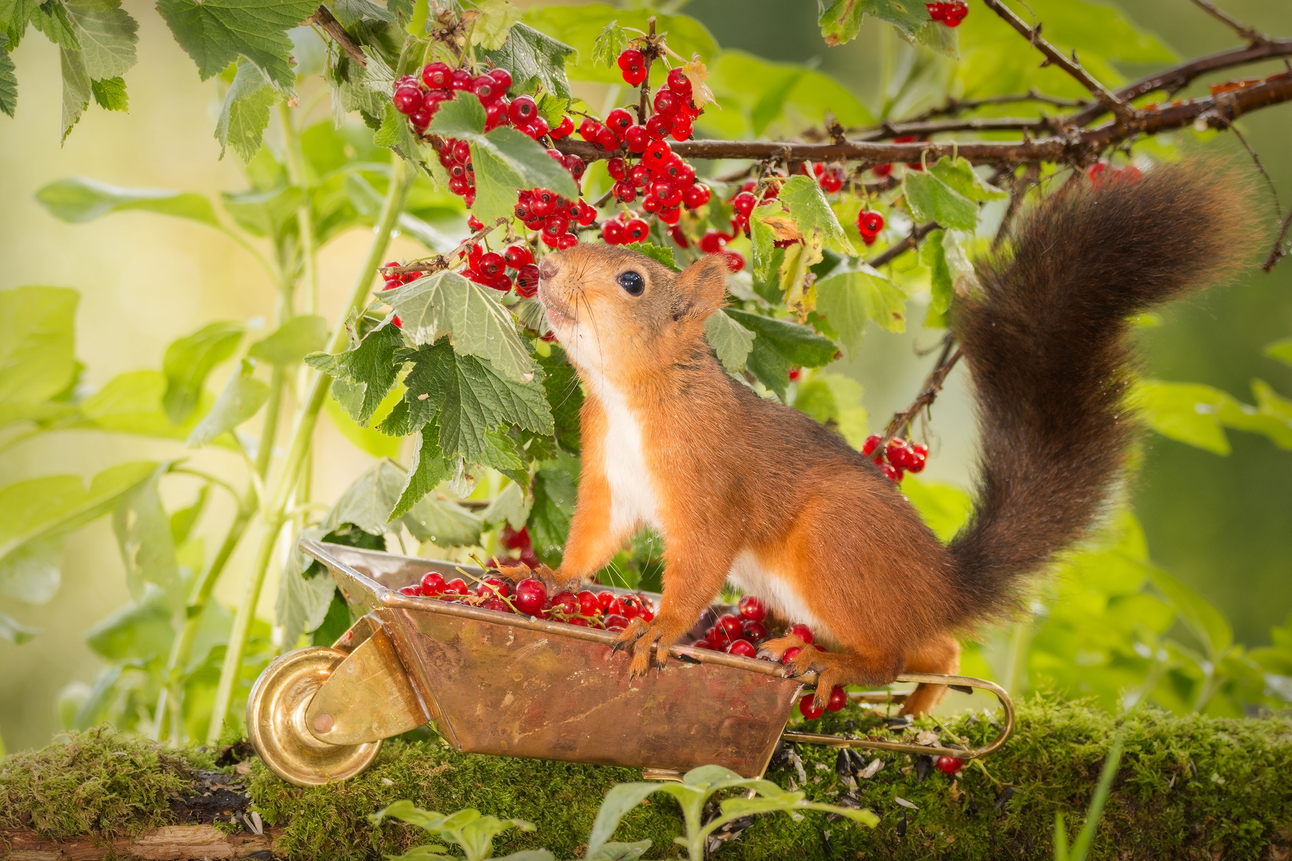 These squirrels are so excited for Autumn - Caters News Agency
