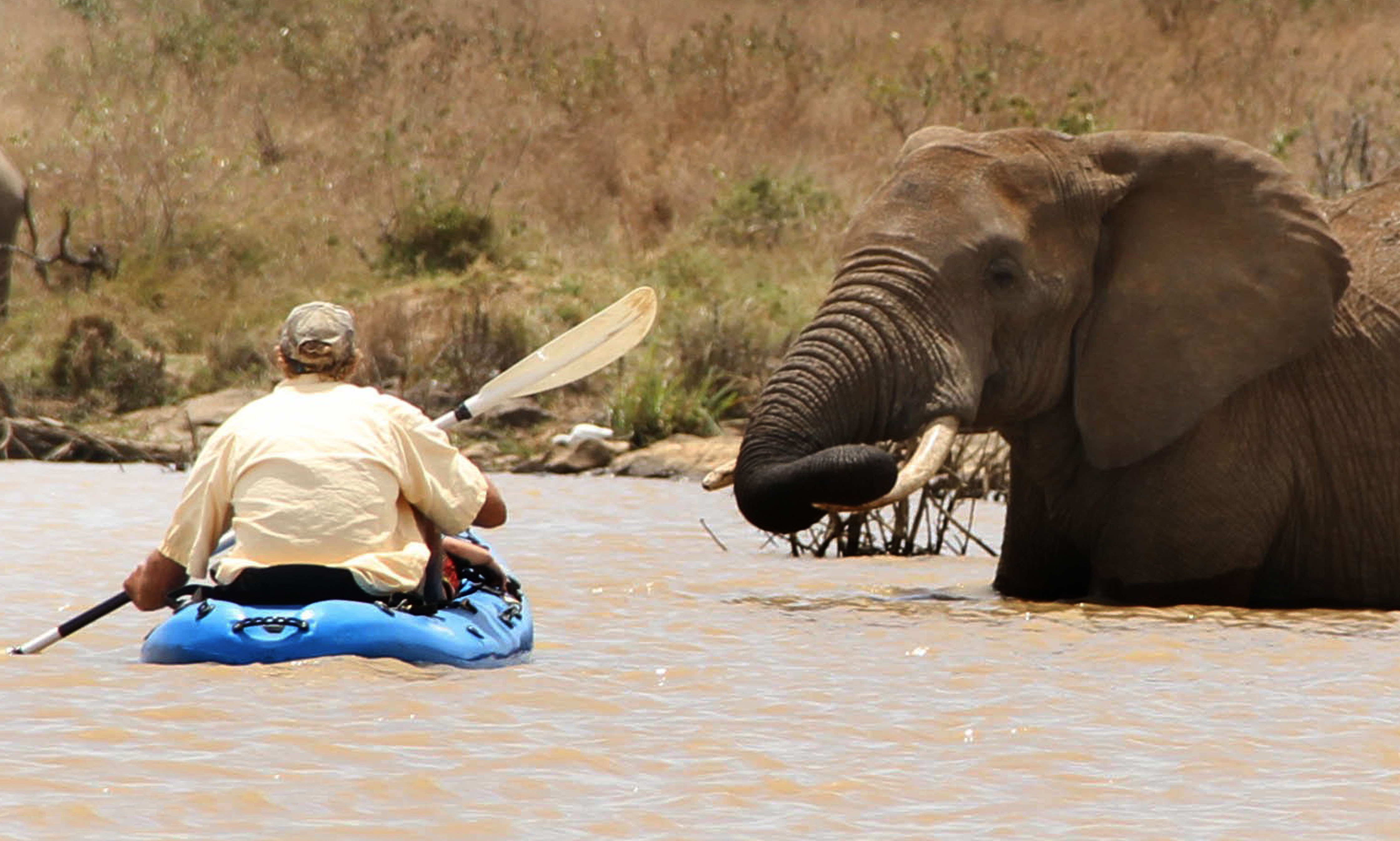 ***MANDATORY BYLINE PIC BY JOSH PERRETT OF EKORIAN.COM/CATERS NEWS - (PICTURED: A kayaker gets a close up view of an elephant at Ekorians Mugie Camp in Kenya. The camp was founded by Donna and Josh Perrett in 2012.) - Tourists had a welcome surprise when they were greeted by ELEPHANTS while kayaking. The holidaymakers were promised a magical experience at a private eco camp in Northern Laikipia, Kenya - and the company certainly delivered! The kayakers were able to get up close and personal with the giant mammals as they played in the water. At one point, three elephants crowded round a very excited couple, while a baby elephant clung onto its back. SEE CATERS COPY.