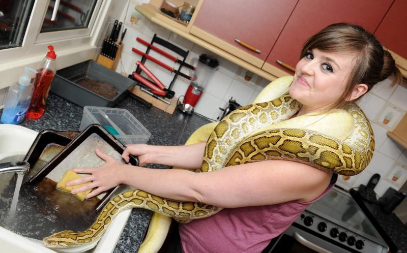 PIC BY KORAY EROL/CATERS NEWS (Pictured: Sam Gorman casually doing the washing up with two of her snakes) - A snake mad couple have transformed their living room into a reptile paradise  with some snakes weighing 12 STONE. Lewis Weightman, 28, from Bulkington, Warwickshire and his partner, Sam Gorman, 23, began collecting snakes six years ago and now have dozens of them caged in their lounge  they include 12 foot long boa constrictors and pythons. The couple even have an entire fridge full of mice and rats to feed their snakes in their kitchen. The snake breeders even claim some of their friends are too frightened to visit their home in case some of the snakes escape. With their snake and lizard collection increasing every year, the couple say they will probably never live without reptiles. SEE CATERS COPY.