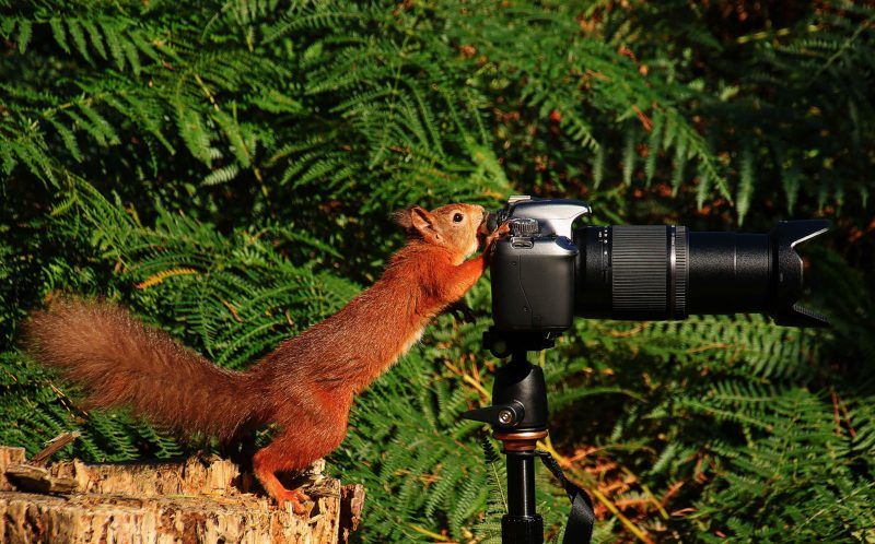 PIC FROM SHANE STANBRIDGE/ MERCURY PRESS - Two friends claim a dream came true when they got a squirrel to take a photograph.