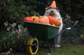 PIC BY CEES BOL/ CATERS NEWS - Sarah posing with a wheelbarrow full of pumpkins.
