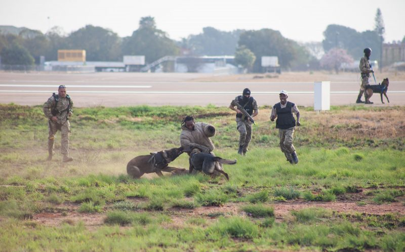 PIC BY Paramount Group Anti-Poaching and K9 Academy/CATERS NEWS - a Poacher is apprehended by a K9 with the handler and other members of the K9 units in hot pursuit.
