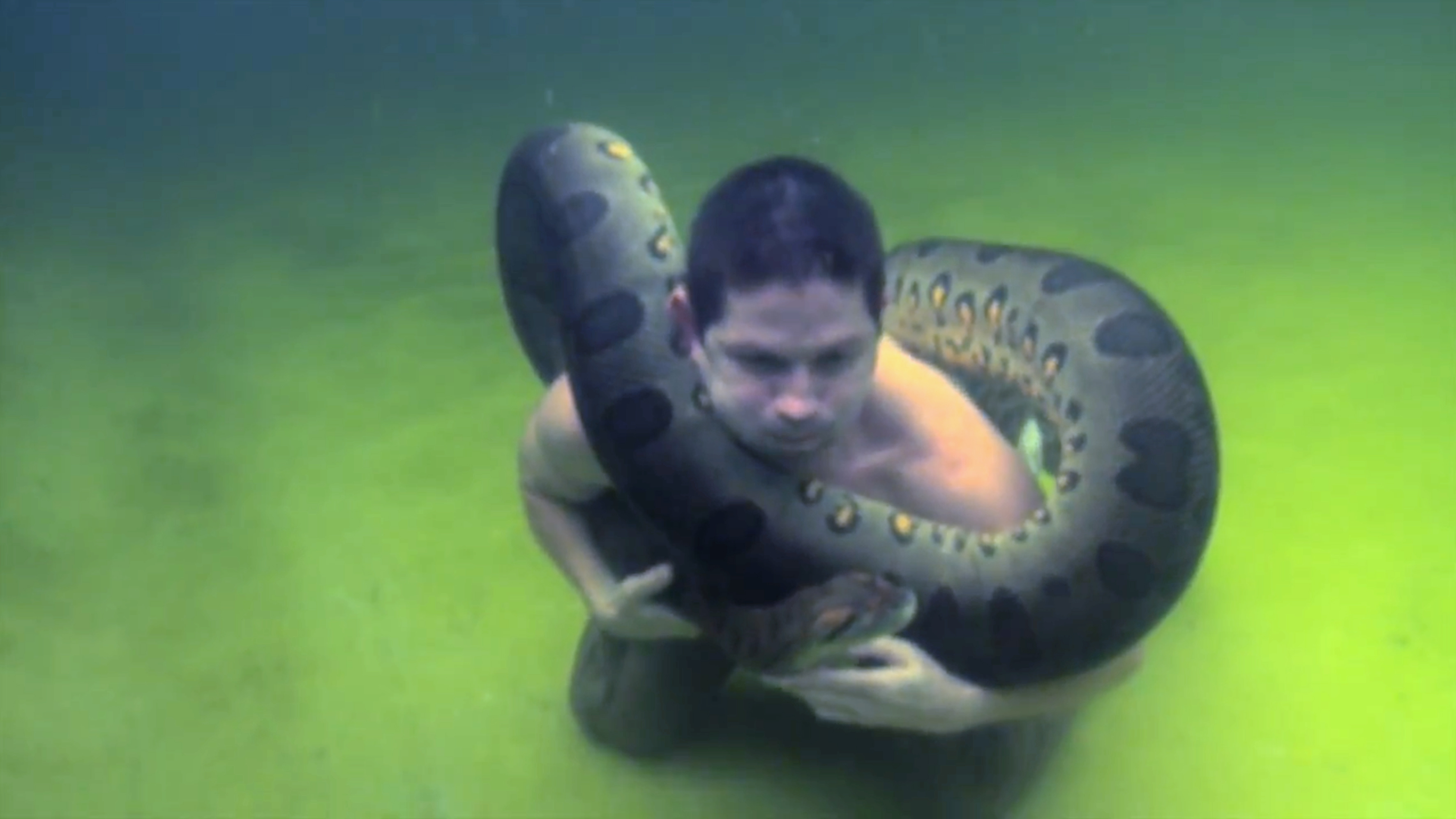 Daredevil Swims With Massive 12ft Long Anaconda Caters