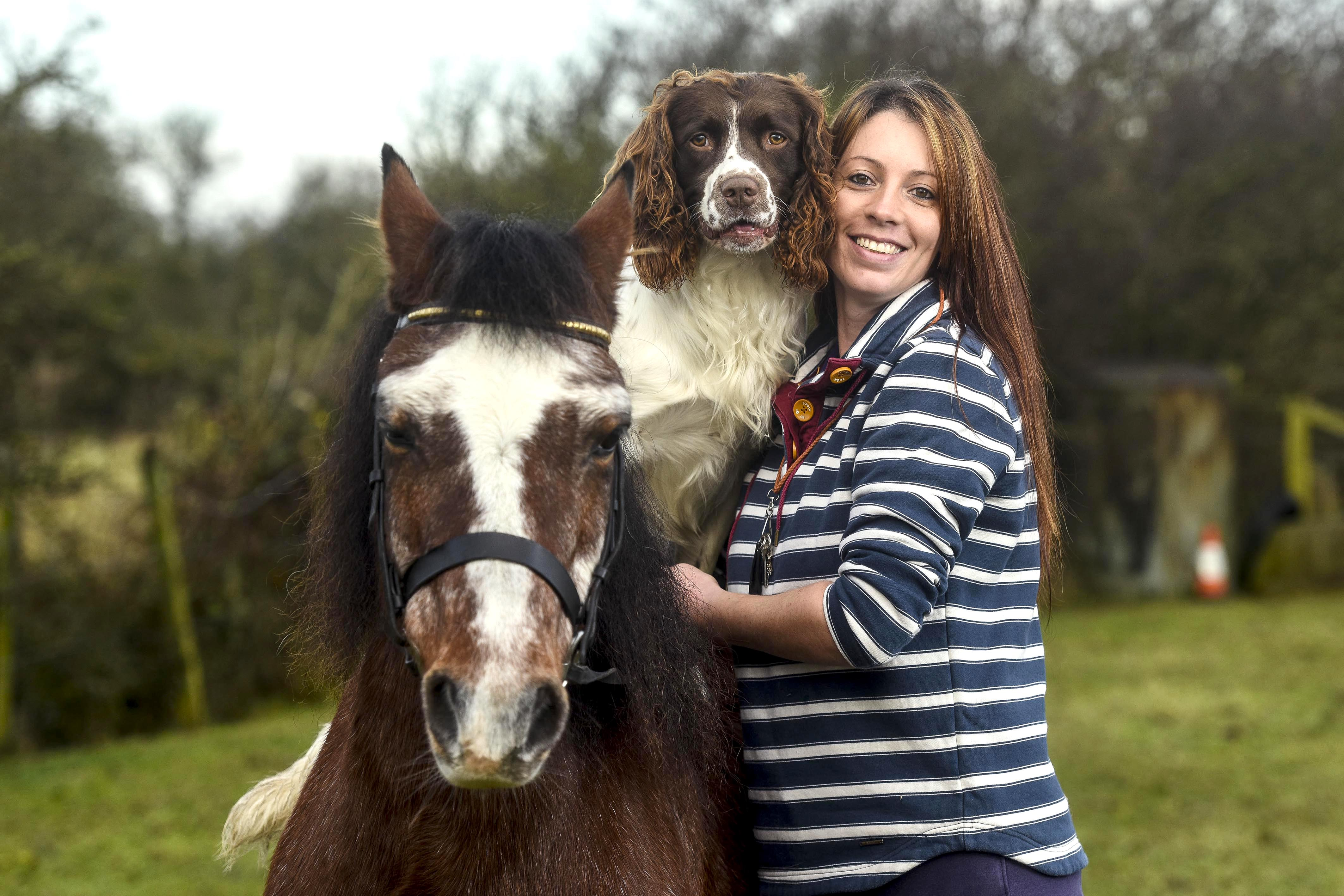 unlikely friends spring spaniel leaps onto his high horse