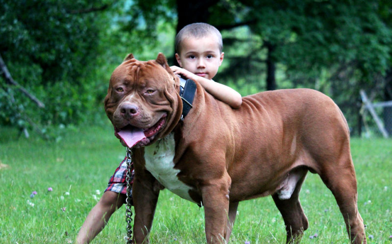 Dog Trainers Raise Kids With The Worlds Biggest Dangerous