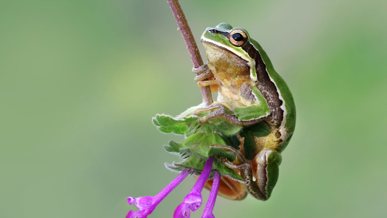 Absolutely ribbiting stunning macro images capture tiny for Frog agency