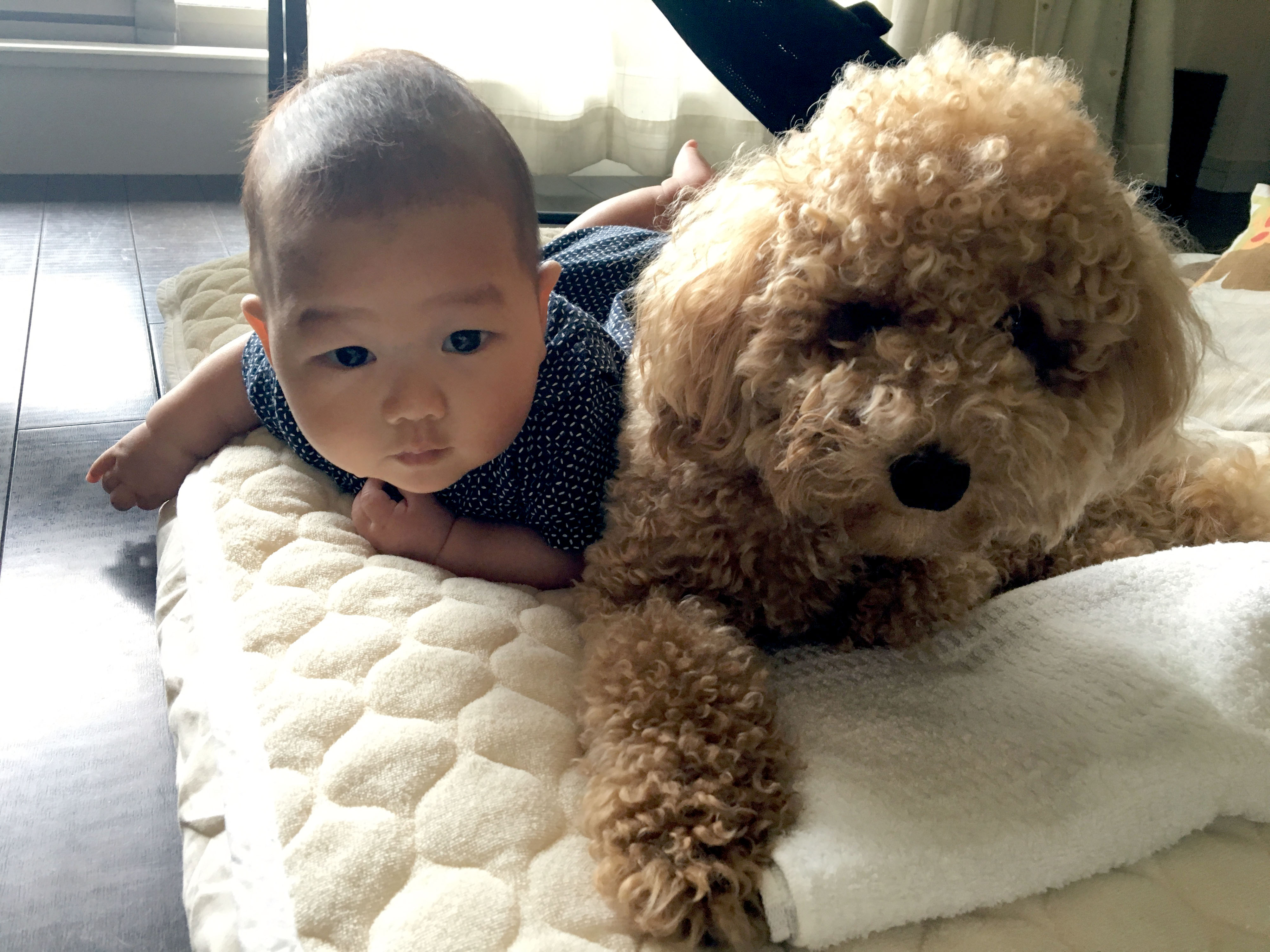 Baby S Brotherly Bond With Real Teddy Bear Toy Poodle Will