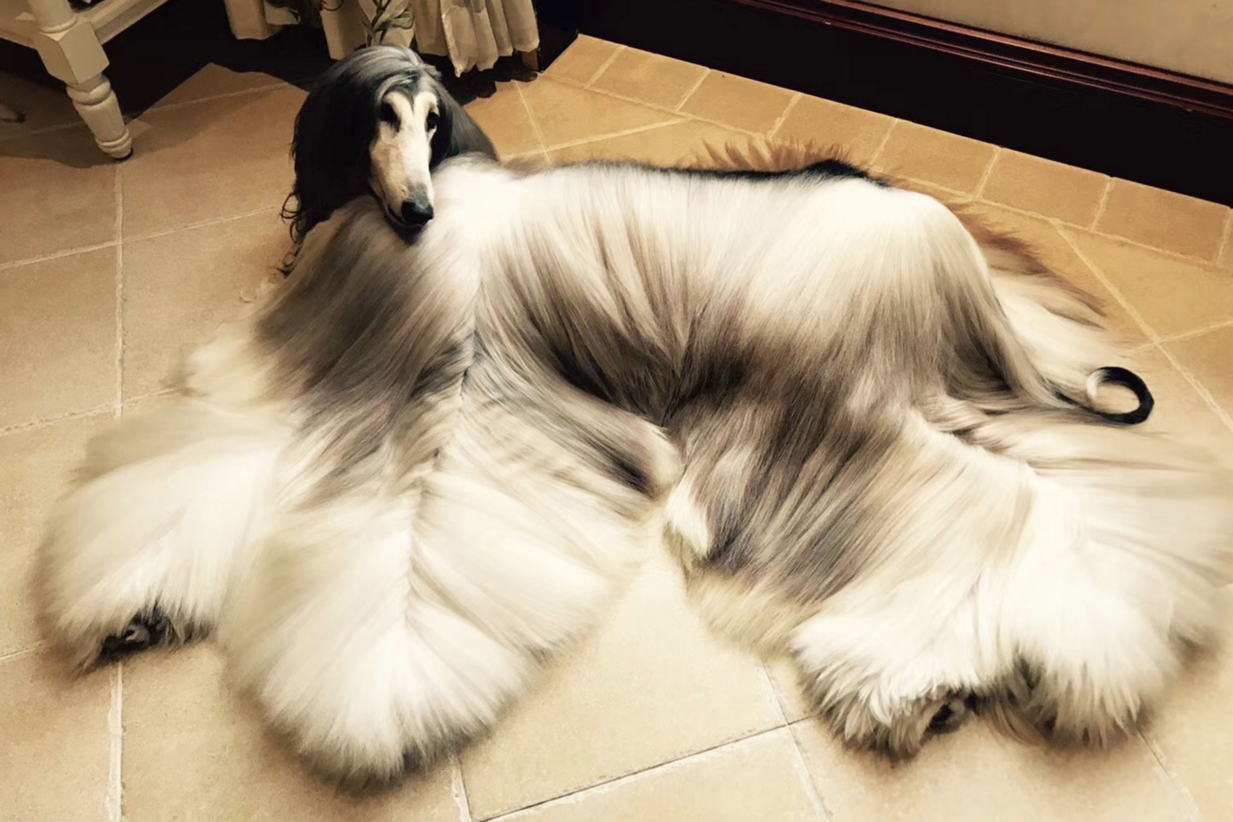 A Glam Hound Owner Of World S Most Stylish Dog Has Spent 28 000 On