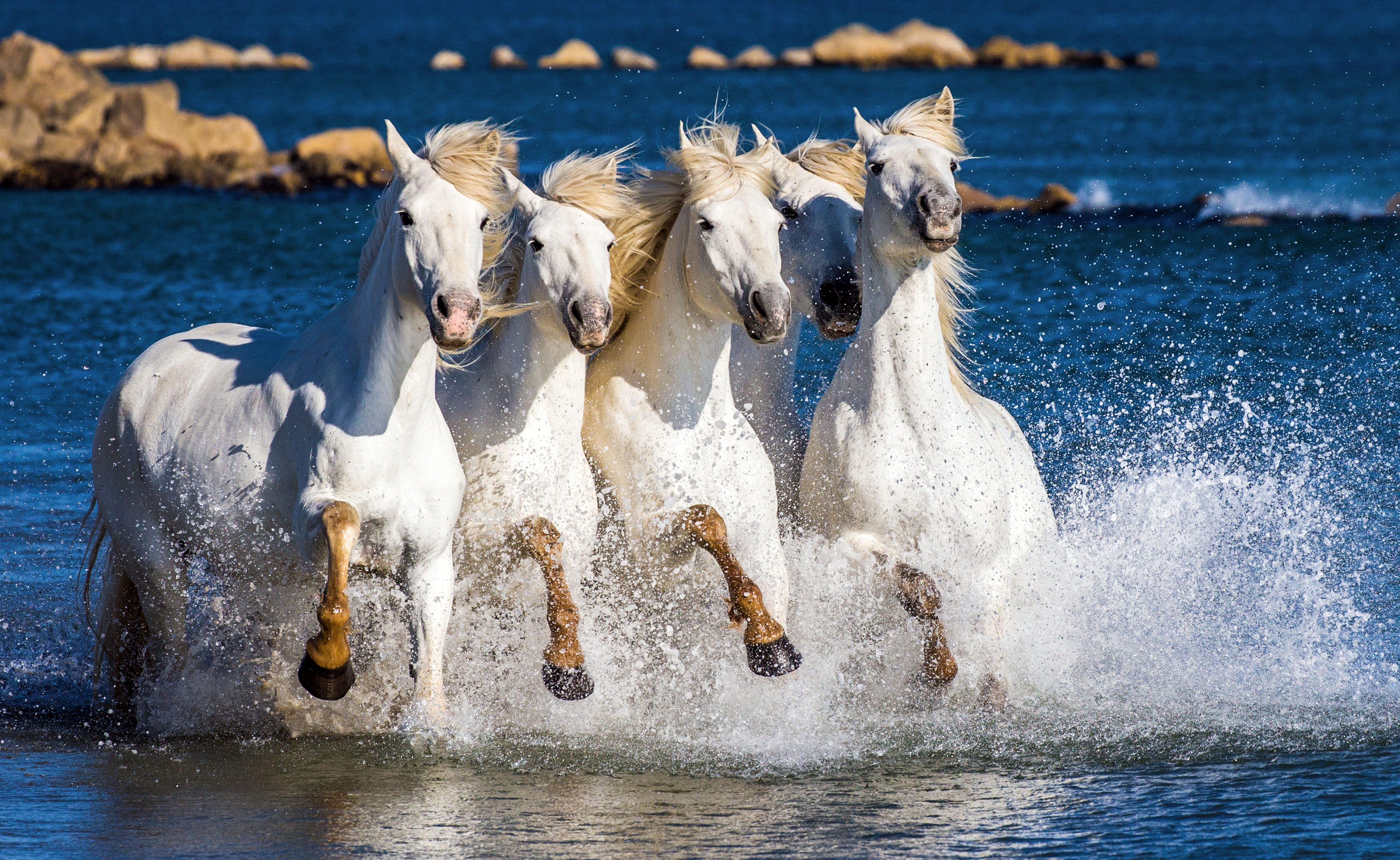 Stunning Images Show Wild Horses As They Gallop Through Lagoons Caters News Agency