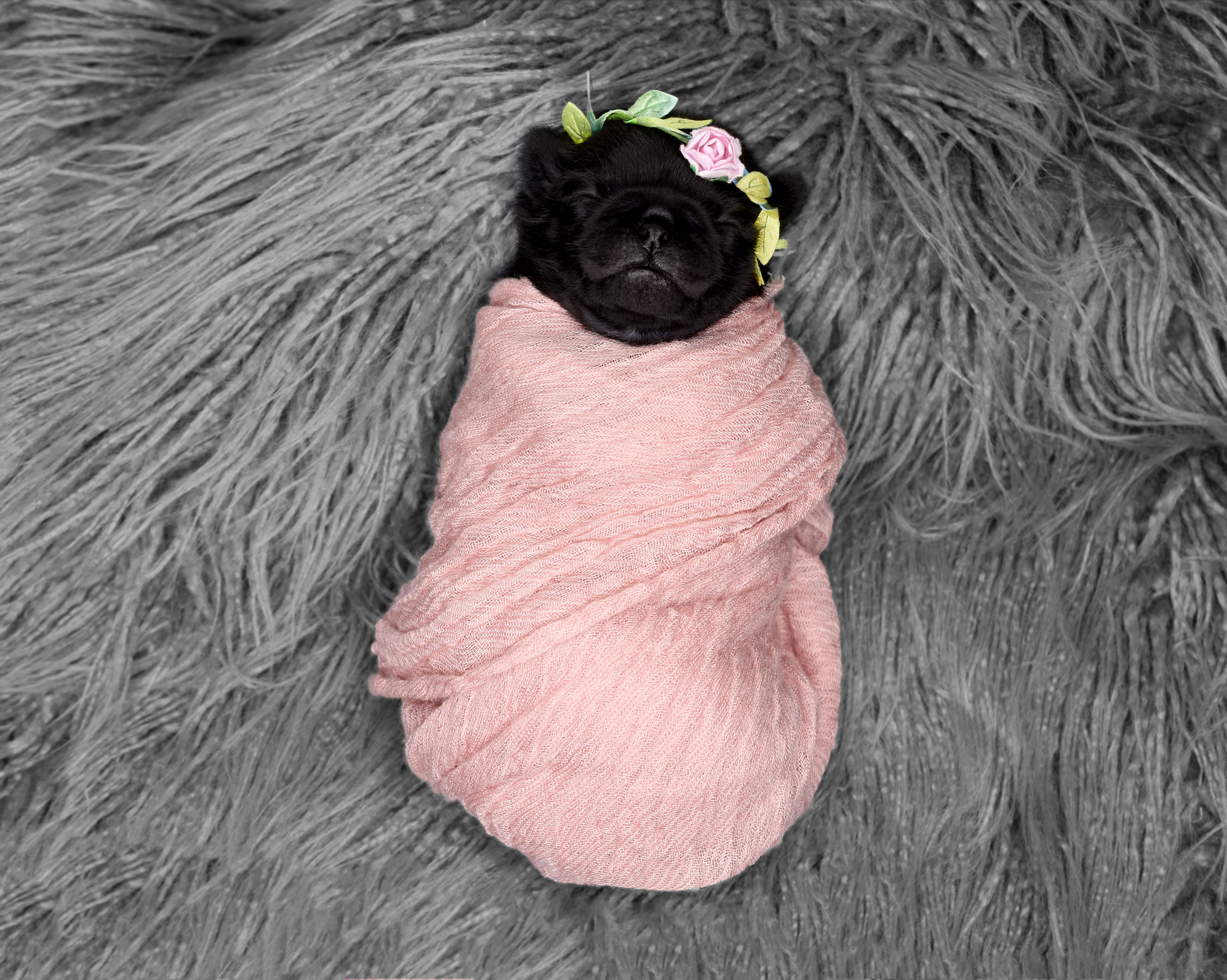 Proud owner documents pooch's pug-nancy with hilarious